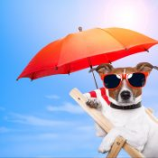 https://depositphotos.com/10032368/stock-photo-dog-sunbathing-on-a-deck.html