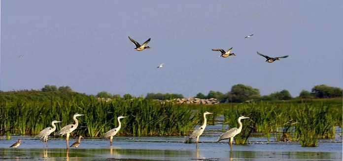 rezervatia-deltei