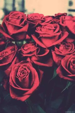 Red-Roses-Tumblr-Background-3