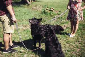 canine dog companion
