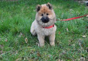 puppy dog pup
