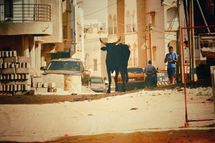 通りには普通に牛が我が物顔で徘徊しています