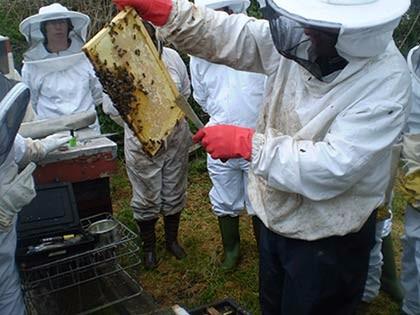 Bees-041sm