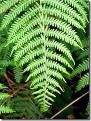 Noxious cocktail: bracken is brimming with unpleasant chemicals