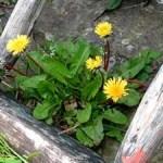 Give weeds a break in your garden