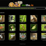 Moths.ie: a photographic guide to Ireland's Moths