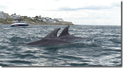 Bottlenose Dolphins Killiney Bay (via IWDG)