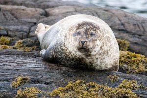 Seals are regularly spotted around Irish coasts