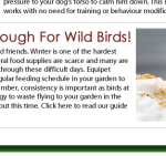 Feed the birds this winter and look what might visit your garden: or perhaps NOT!