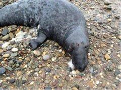 Dead-seal