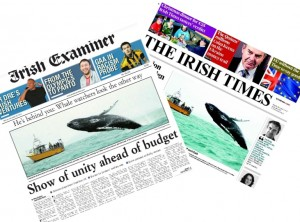 Humpback Whales in West Cork: Front Page News