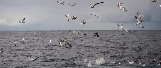 Bird Watching in Ireland -- seabirds