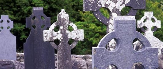 Graveyards are a haven for Irish wildlife