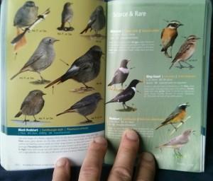 Birds of Ireland Species Profiles
