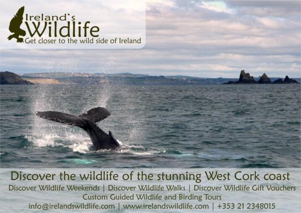 Ireland's Wildlife Poster