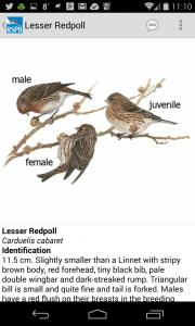 RSPB E-Guide Lesser Redpoll