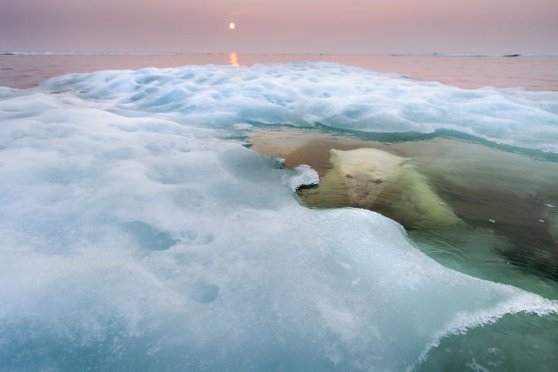 28_Paul-Souders-USA-The-water-bear.jpg