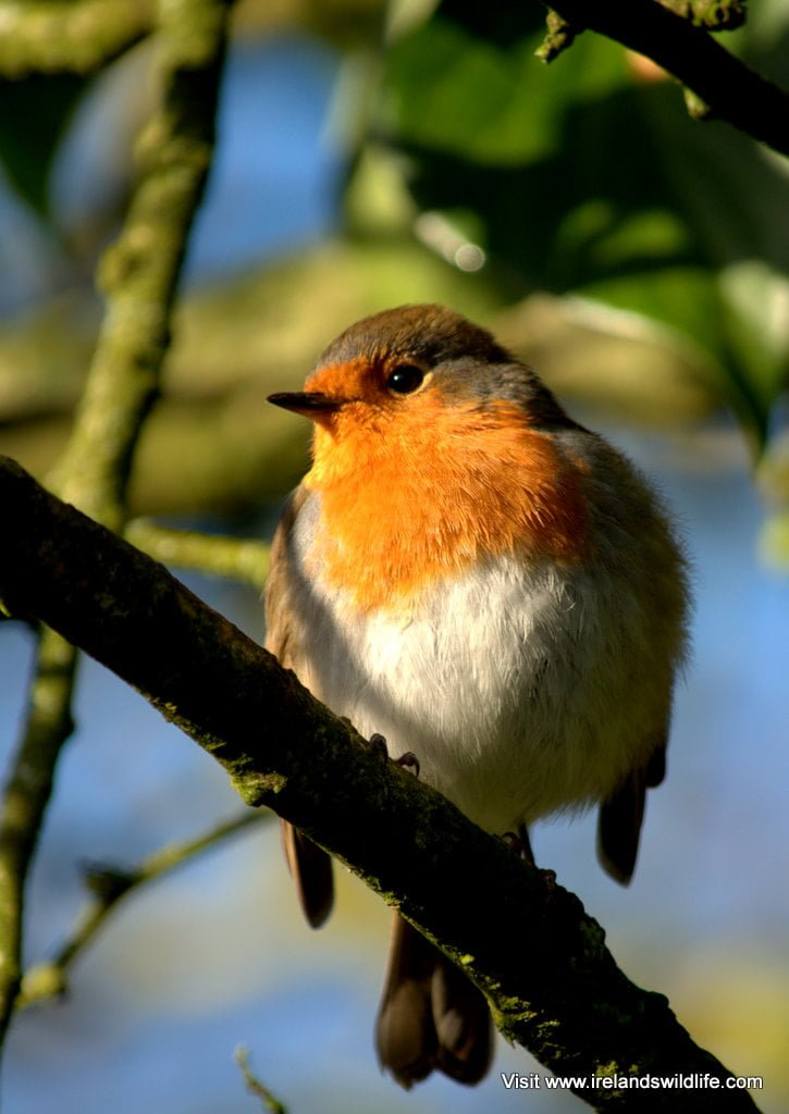 9 top tips for feeding your garden birds | Ireland's Wildlife