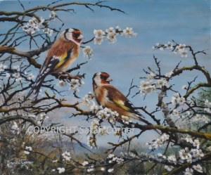 Goldfinches on blossom