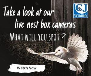 CJ Wildlife Webcam_300x250