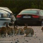 New TV show explores the wildlife of Ireland's cities