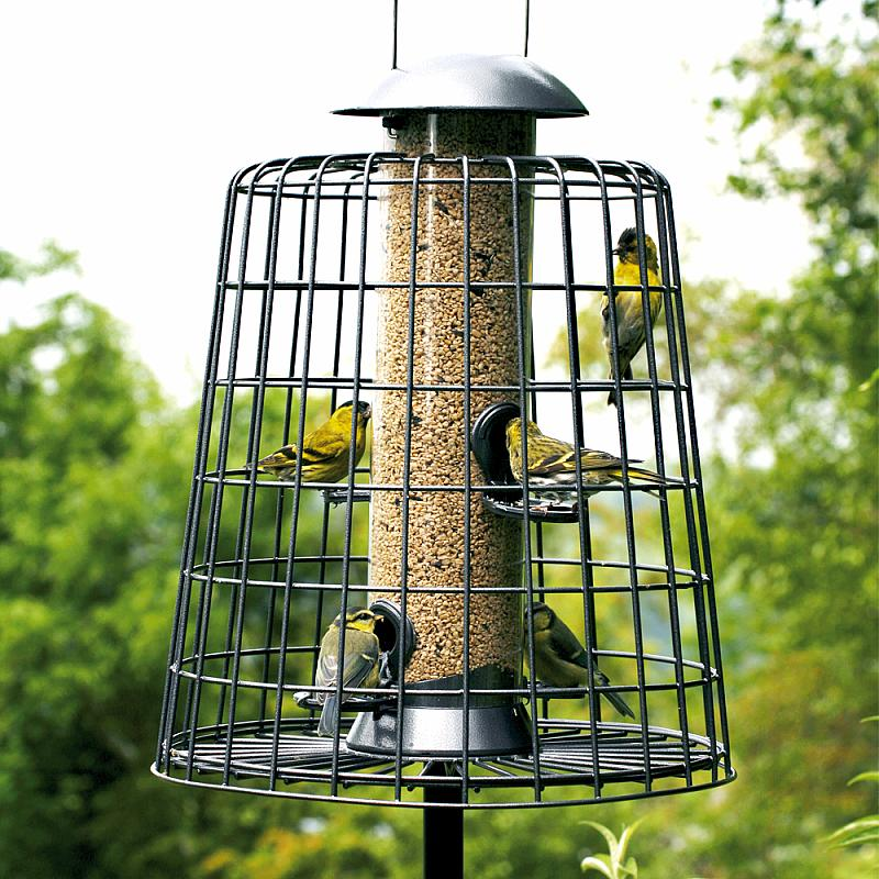 Feeder guardian: keep larger birds and squirrels at bay | Ireland's