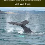 New collection of wildlife and nature writing published