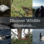 The wildlife of Ireland's Wild Atlantic Way
