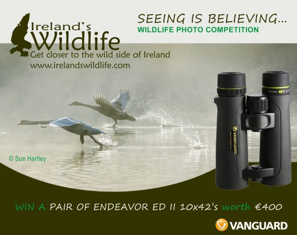 Win a pair of Vanguard Endeavor EDII Binoculars