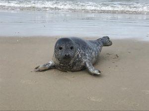 Een verhaal over een dode zeehond en een nieuwe aarde