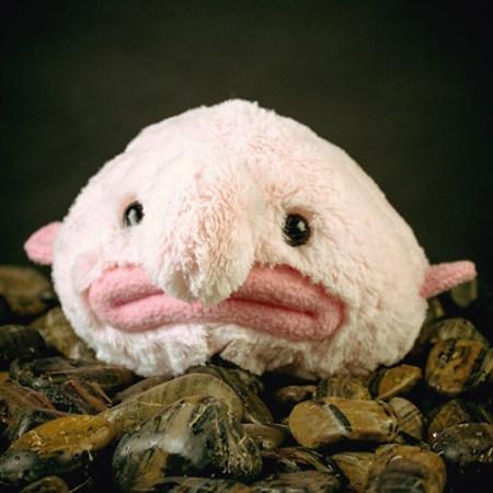 Der hässlichste Fisch der Welt als Plüschtier: Blobfisch Kuscheltier