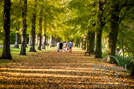 Herbstspaziergang im Rotehornpark Magdeburg