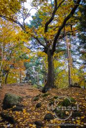 Farbenspiel der Natur – Wenn sich das Herbstlaub bunt färbt – Spaziergang im Harz