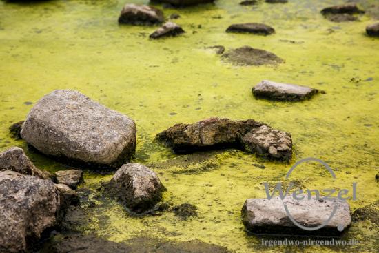Elbe bei Niedrigwasser - wo die Entengrütze grünlich schimmert