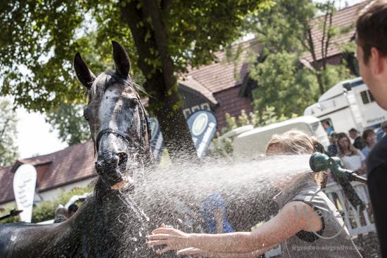 Auf das richtige Pferd gesetzt – Renntag im Herrenkrug-Park Magdeburg