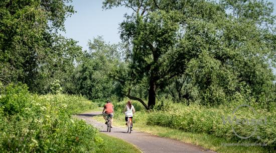 Elbe, Radweg, Natur, Spaziergang, Magdeburg, Buckau, Salbker See –  Foto Wenzel-Oschington.de