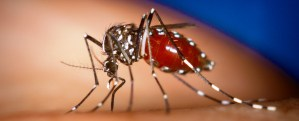 Measures ramped up  to rid communities of mosquitoes