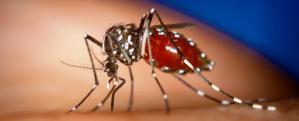 Vigilance urged against the spread of the dengue virus