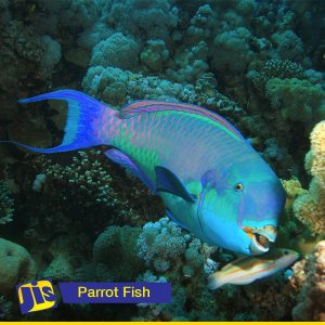 PM Holness urges citizens to rethink consumption of parrot fish