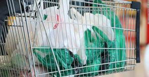 16 persons and companies charged for breaching plastic ban