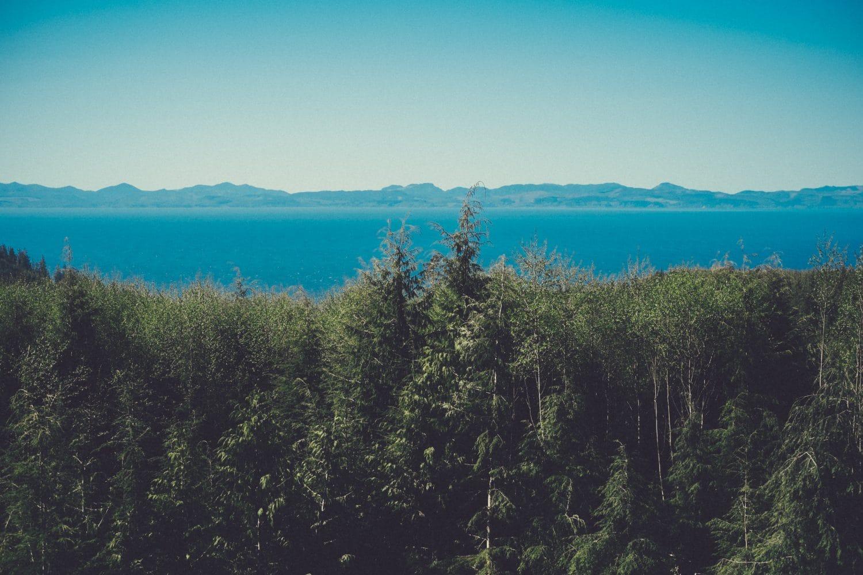 forest lake nature landscape