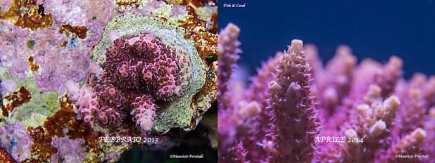 Confronto A. Hyacinthus - Febbraio 2013 - Aprile 2014