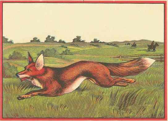 http://vintagerio.com/animal_g87-fox_p411.html