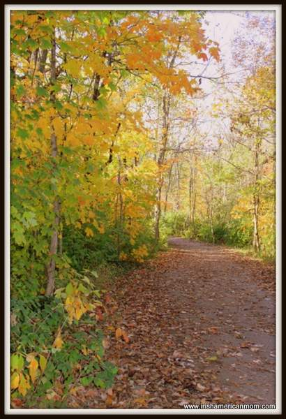 Leafy path in fall