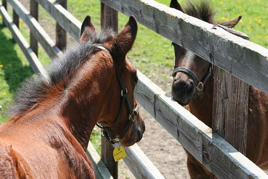 Foals at the Irish National Stud