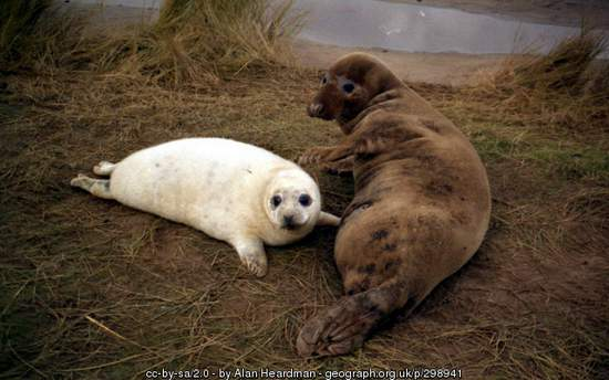 Mother seal and pup