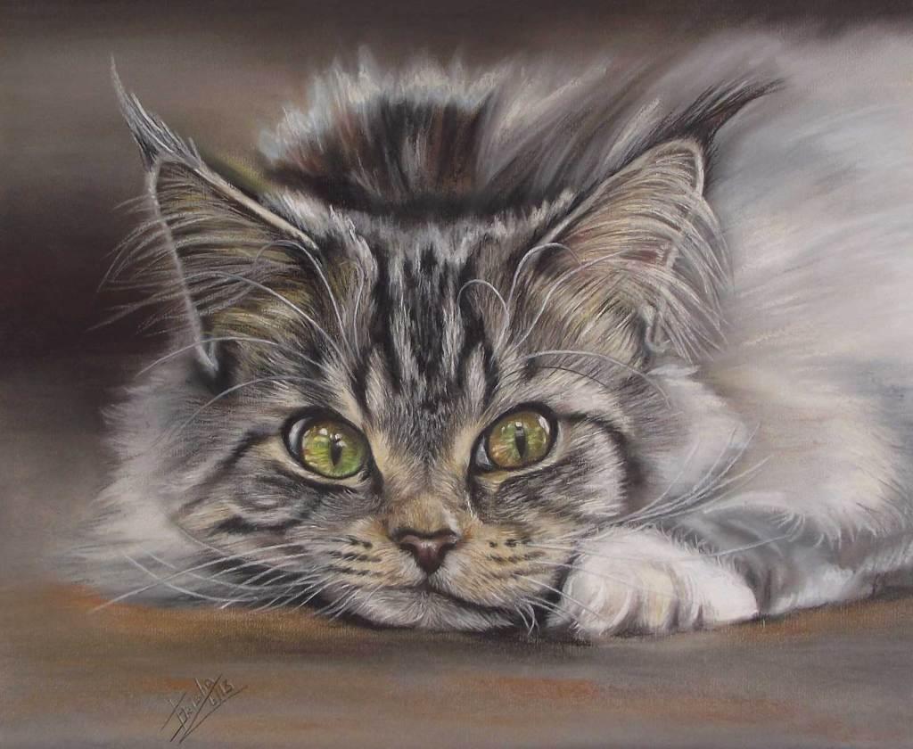 Siberian cat pastel portrait painting uk