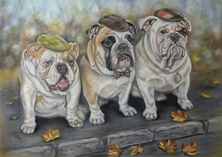 Bulldogs Portrait