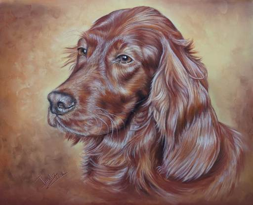 Irish Red Setter Portrait