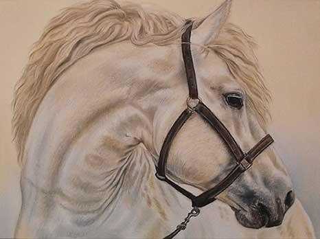 Horse Portraits - Irisha's Pet Portraits